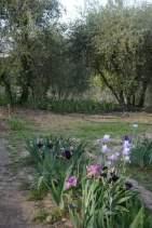 Florence Iris Garden_286